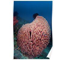 Barrel sponge on the reef Poster