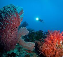 Diver surveying beautiful reef scene by Stephen Colquitt
