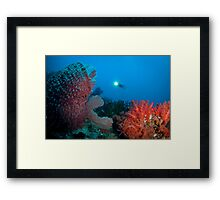 Diver surveying beautiful reef scene Framed Print