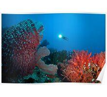 Diver surveying beautiful reef scene Poster