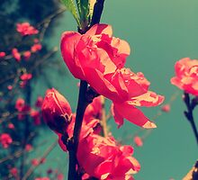 Lomo Blossoms  by Fledermaus