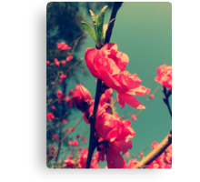 Lomo Blossoms  Canvas Print
