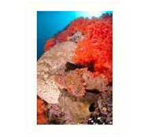 Scorpion fish on reef wall Art Print