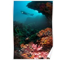 Diver in coral garden Poster
