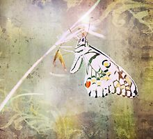 Once Upon A Butterfly by Ann Barnes