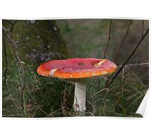 A Noddy Mushroom Poster