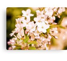 Antique Blossoms Canvas Print