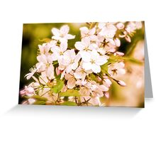 Antique Blossoms Greeting Card
