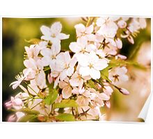 Antique Blossoms Poster