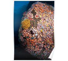 Ornate undersea boulder  Poster