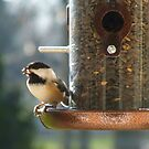 A Chicadee at the Feeder by Stephen D. Miller
