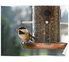 A Chicadee at the Feeder Poster