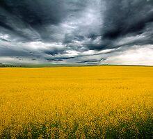 Golden Fields - Canola Field, Kanmantoo - Callington, South Australia by Mark Richards