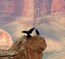 Grand Canyon Ravens by Dan Owens