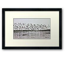 Crowded Sky Framed Print