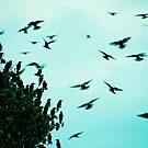 Birds by Benjamin Sloma