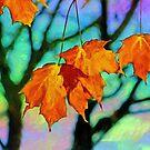 Autumn Kaleidoscope by Curtis  Sheppard