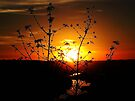 Sensational Sunset by Brenda Dahl