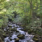River in The Smoky Mountains 1 by FishmanPhoto