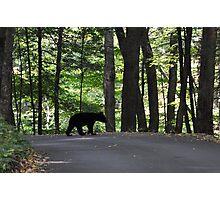 Bear Cub Photographic Print