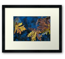 sycamore canyon creek Framed Print