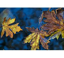 sycamore canyon creek Photographic Print
