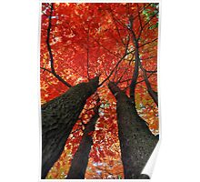 Autumn in the Trees Poster