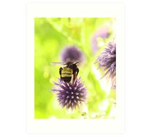 Bumble and Thistle Art Print