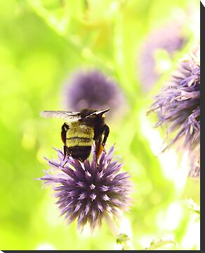 Bumble and Thistle by Barbara Muller