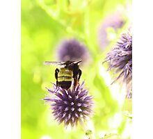 Bumble and Thistle Photographic Print