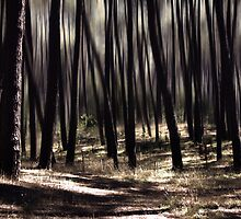 autumn rays by Ingrid Beddoes