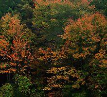 Rhode Island Foliage Close-up by Nancy de Flon