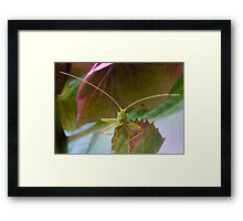 Bush Cricket Framed Print