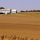 Farmland by Valeria Lee