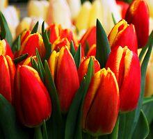 More Tulips by stevefinn77