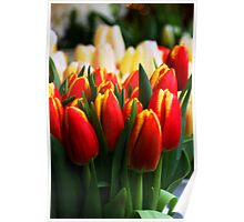 More Tulips Poster