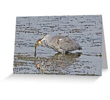 Grey Heron with fish supper Greeting Card