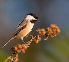 loves burdock seeds by jamesmcdonald