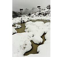 blizzard... Photographic Print