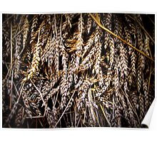Crop in Barn at Mount Vernon Poster