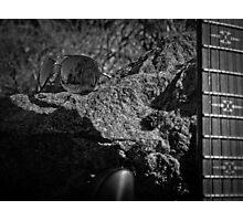 Music Nature: Rock 2 Photographic Print