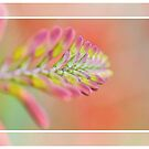 Summer Garden Flame by pseth