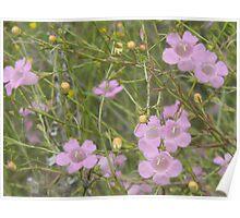 Delighting in Purple Gerardia Poster