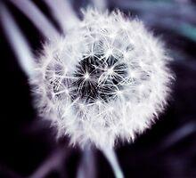 white flower buds by Thomas Lynch