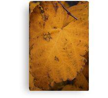 Big Yellow Leaf Canvas Print