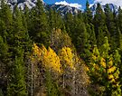 Fall Colours in Kananaskis by Yukondick