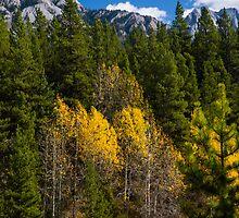 Fall Colours in Kananaskis by Yukondick