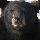 Mama Bear by Alex Call