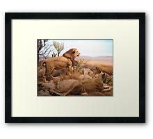 Pride of Lions Framed Print