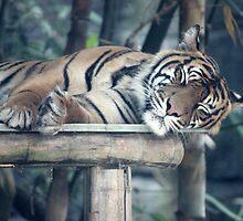 Sleepy Tiger by Jennifer Heseltine